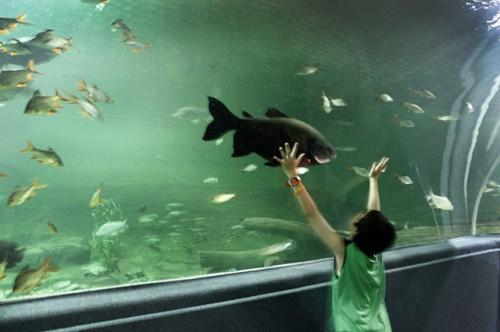 Fischen in Talentpool
